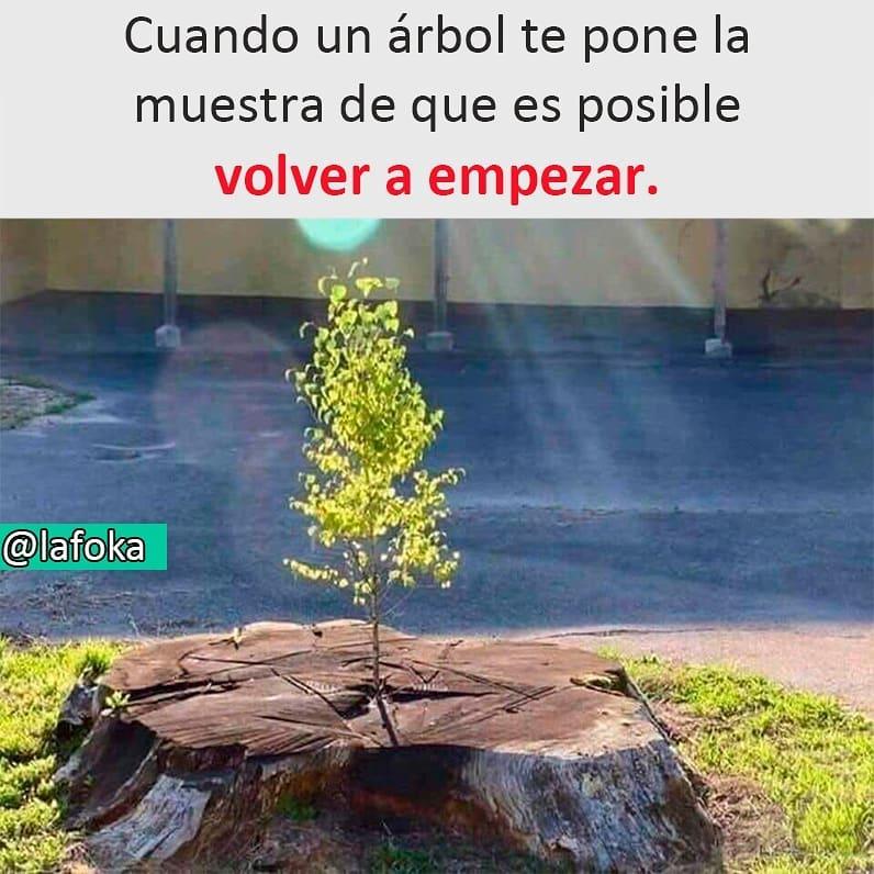Cuando un árbol te pone la muestra de que es posible volver a empezar.