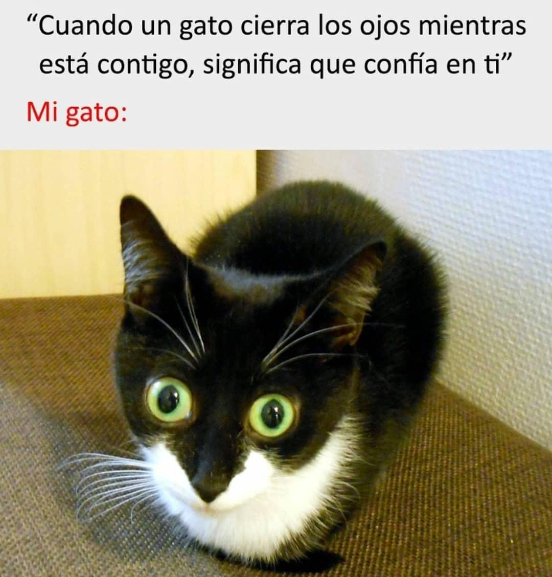 """""""Cuando un gato cierra los ojos cuando está contigo significa que confía en ti""""  Mi gato:"""