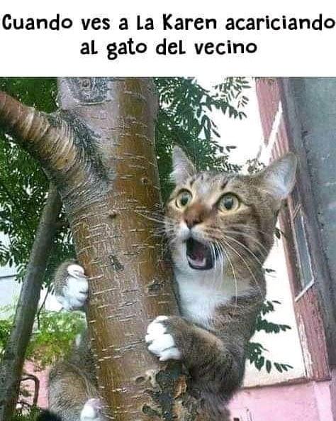Cuando ves a la Karen acariciando al gato del vecino.