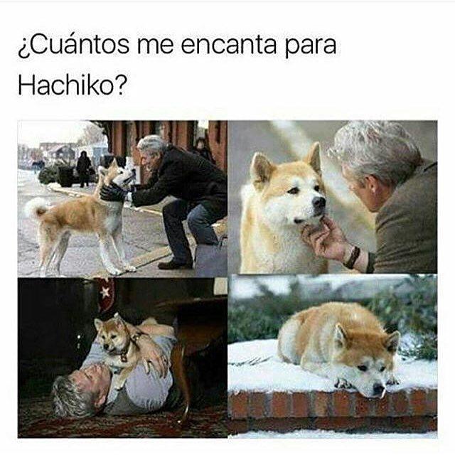 ¿Cuántos me encanta para Hachiko?