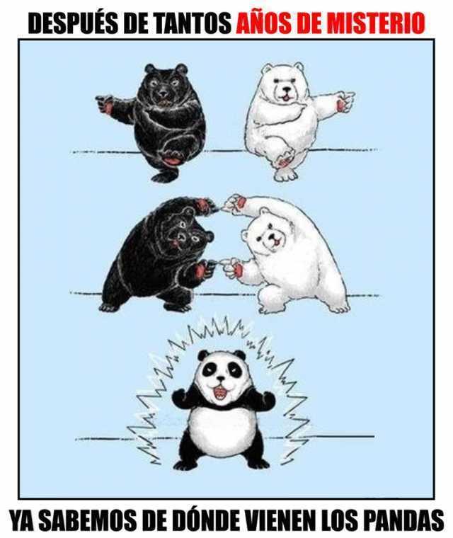 Después de tantos años de misterio ya sabemos de dónde vienen los pandas.