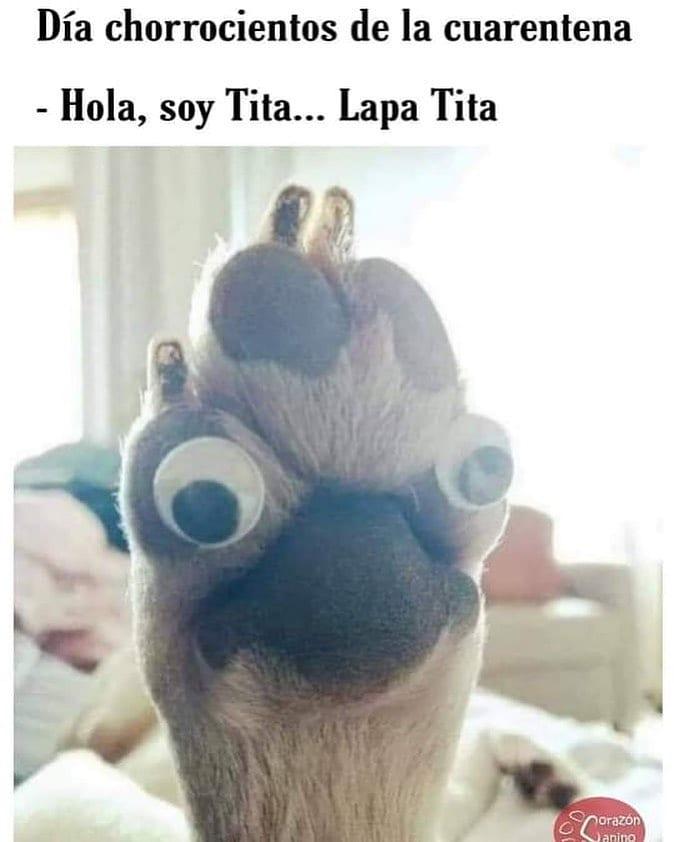 Día chorrocientos de la cuarentena.  Hola, soy Tita... Lapa Tita.