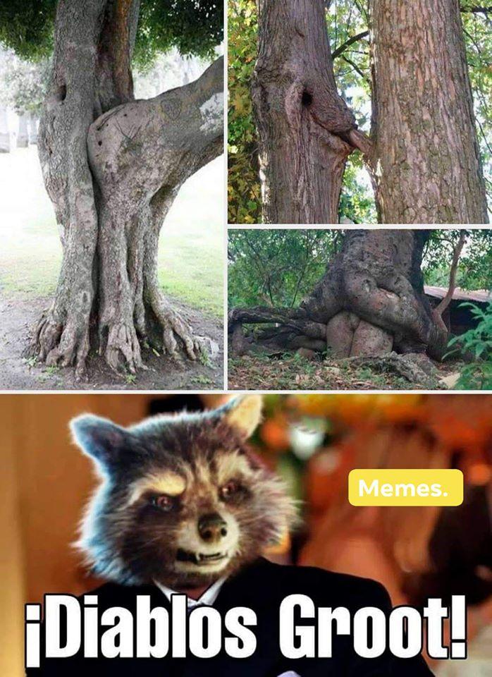 ¡Diablos Groot!
