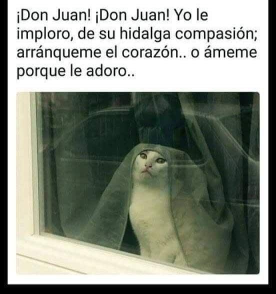 ¡Don Juan! ¡Don Juan! Yo le imploro, de su hidalga compasión; arránqueme el corazón.. o ámeme porque le adoro..