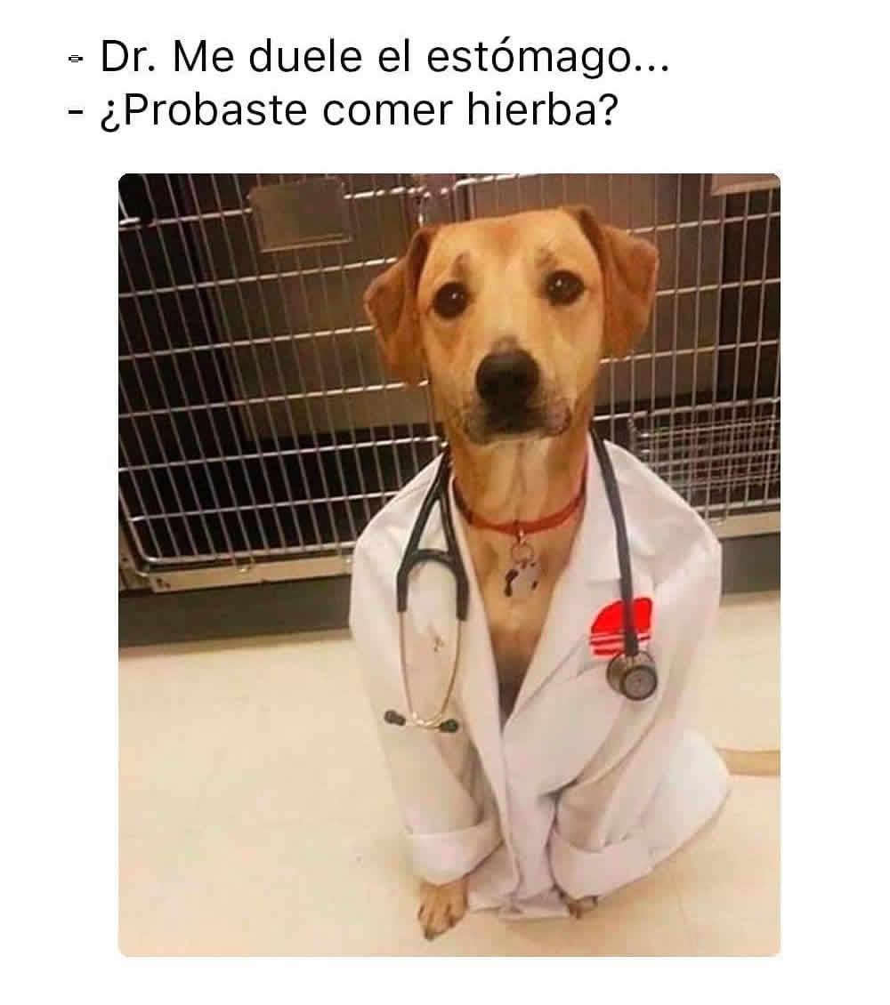 Dr. Me duele el estómago... ¿Probaste comer hierba?