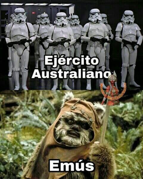 Ejército Australiano. / Emús.