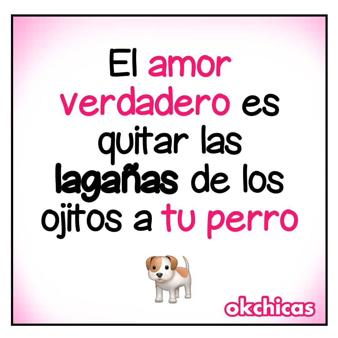 El amor verdadero es quitar las lagañas de los ojitos a tu perro.