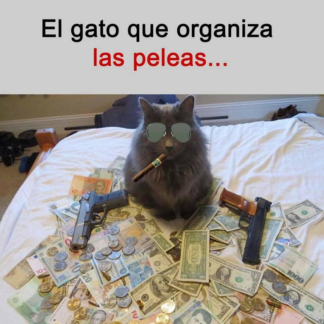 El gato que organiza las peleas...