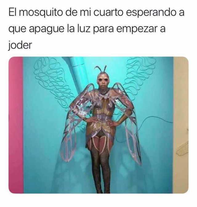 El mosquito de mi cuarto esperando a que apague la luz para empezar a joder.
