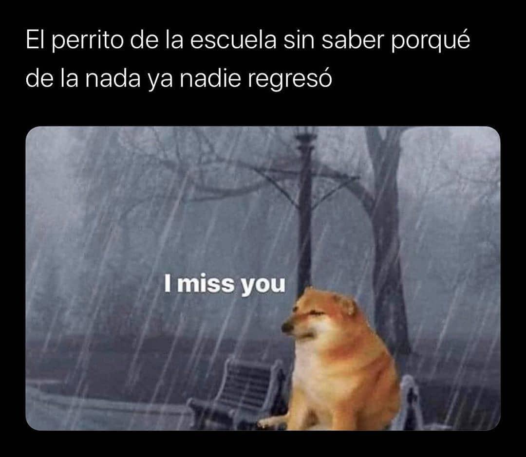 El perrito de la escuela sin saber porqué de la nada ya nadie regresó. I miss you.