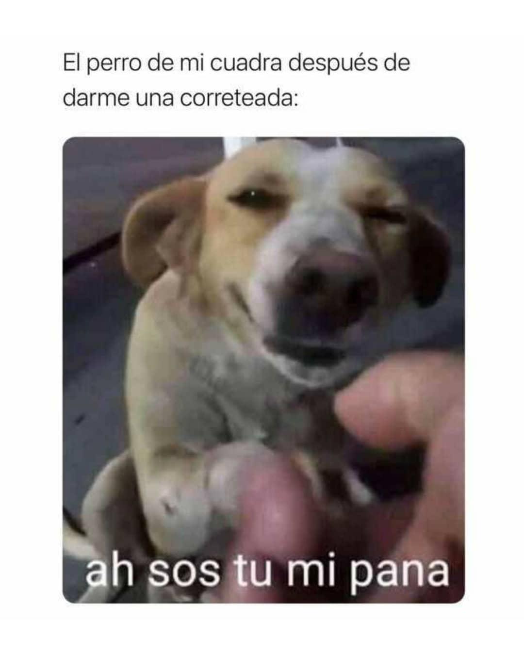 El perro de mi cuadra después de darme una correteada: H sos tu mi pana.