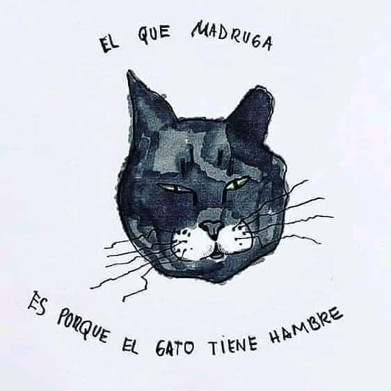 El que madruga es porque el gato tiene hambre.