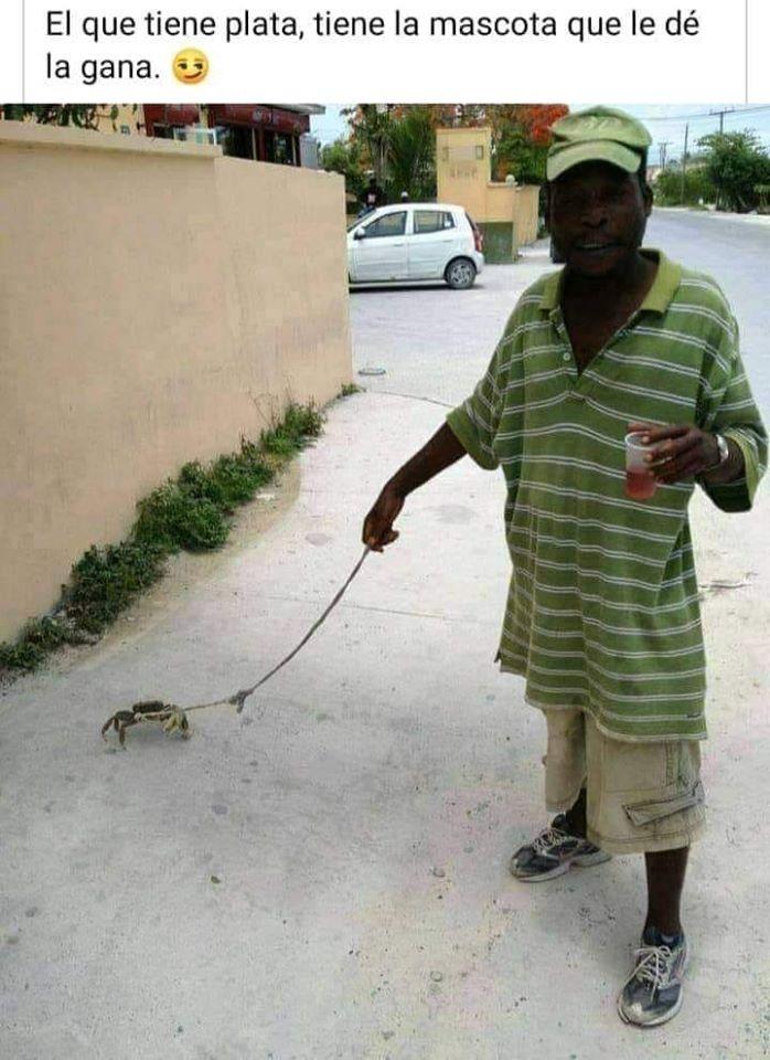 El que tiene plata, tiene la mascota que le dé la gana.