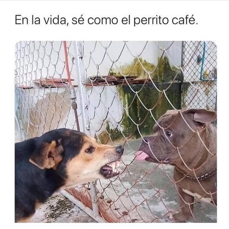 En la vida, sé como el perrito café.