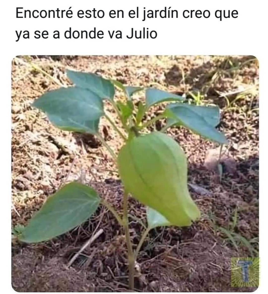 Encontré esto en el jardín creo que ya se a donde va Julio.