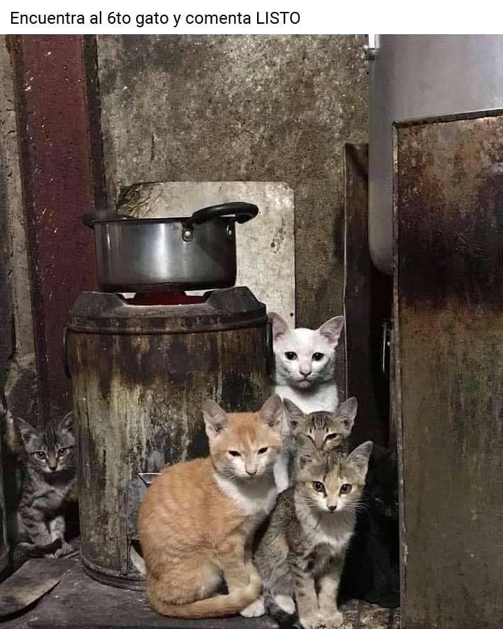 Encuentra al 6to gato y comenta listo.