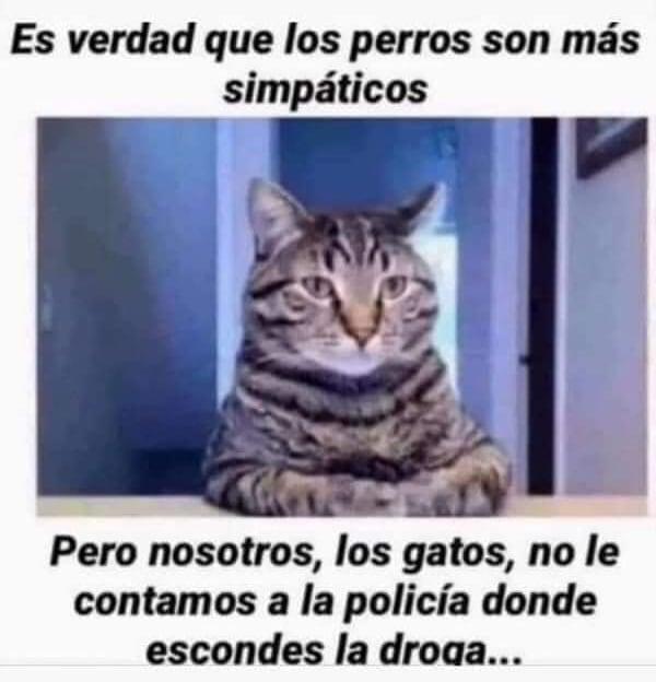 Es verdad que los perros son más simpáticos. Pero nosotros, los gatos, no le contamos a la policía donde escondes la droga...