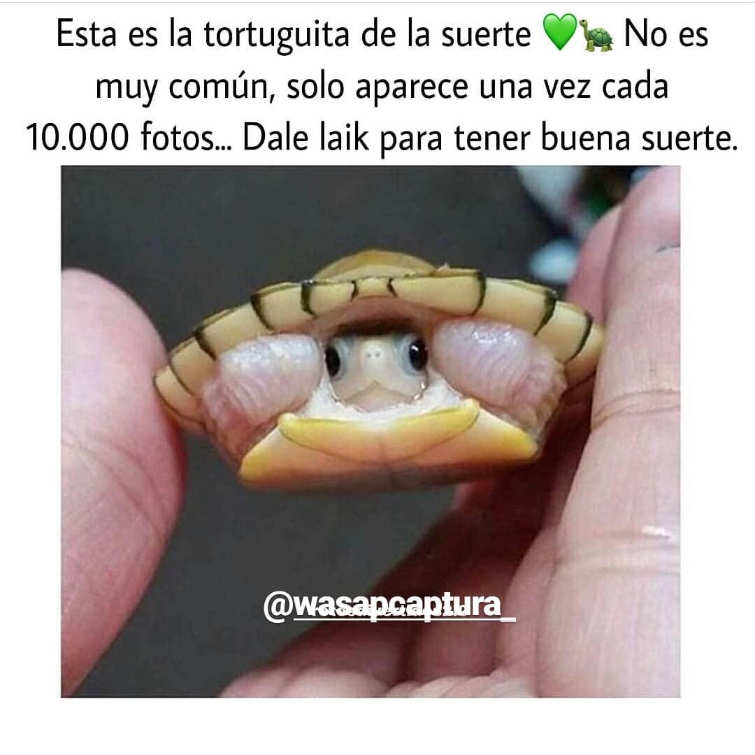 Esta es la tortuguita de la suerte muy común, solo aparece una vez cada 10.000 fotos... Dale laik para tener buena suerte.