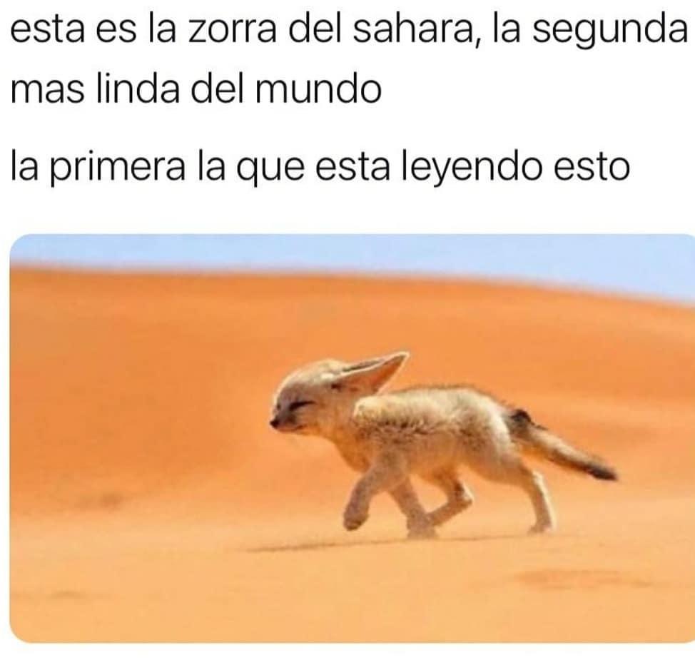 Esta es la zorra del Sahara, la segunda más linda del mundo. La primera la que está leyendo esto.
