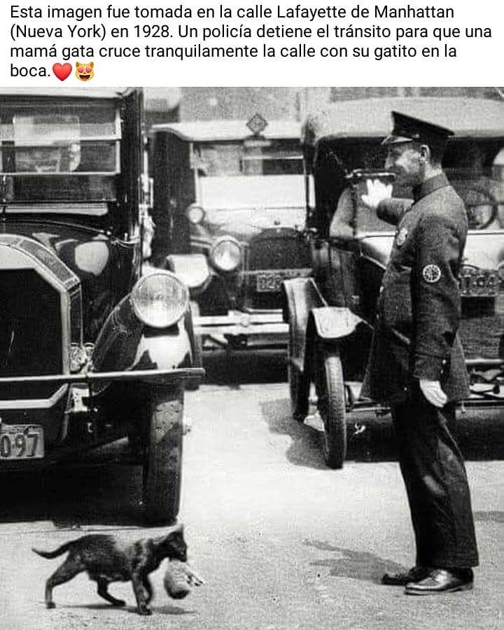 Esta imagen fue tomada en la calle Lafayette de Manhattan (Nueva York) en 1928. Un policía detiene el tránsito para que una mamá gata cruce tranquilamente la calle con su gatito en la boca.