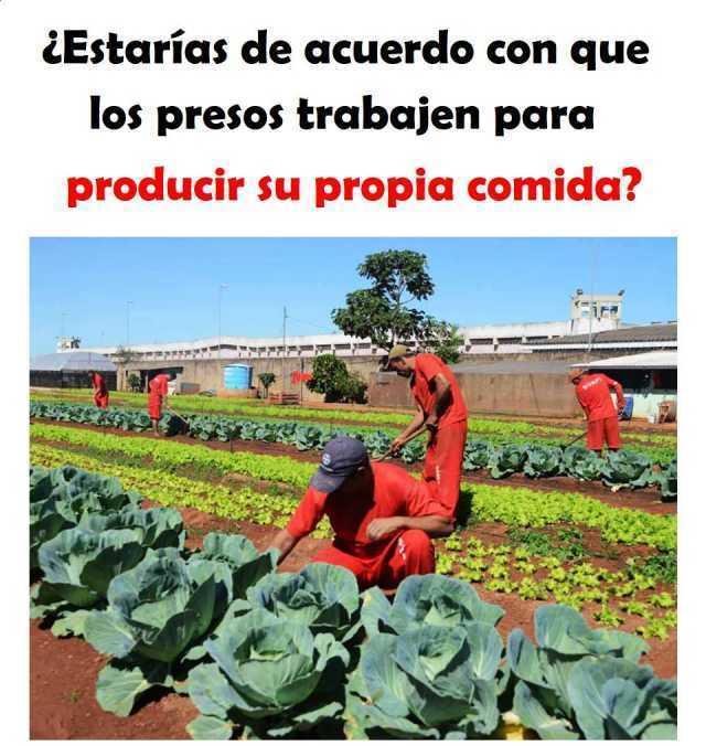 ¿Estarías de acuerdo con que los presos trabajen para producir su propia comida?