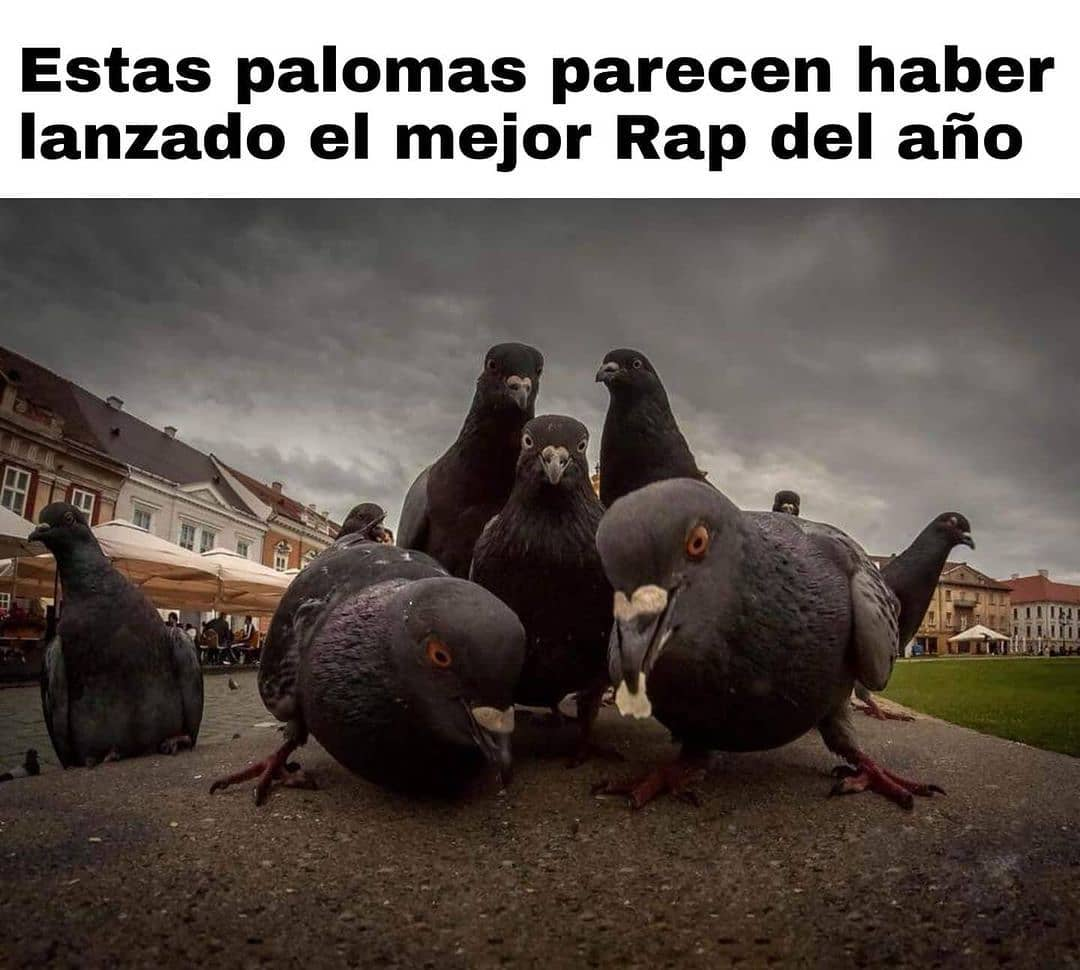 Estas palomas parecen haber lanzado el mejor Rap del año.
