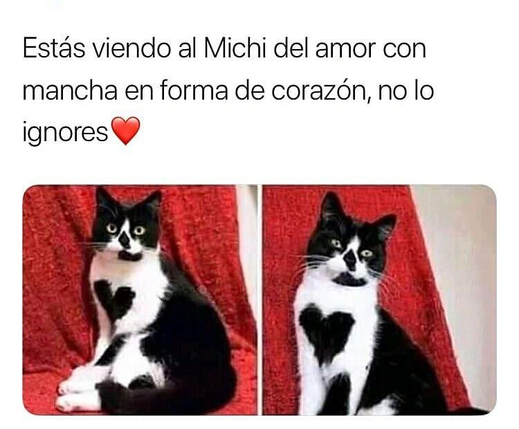 Estás viendo al Michi del amor con mancha en forma de corazón, no lo ignores.