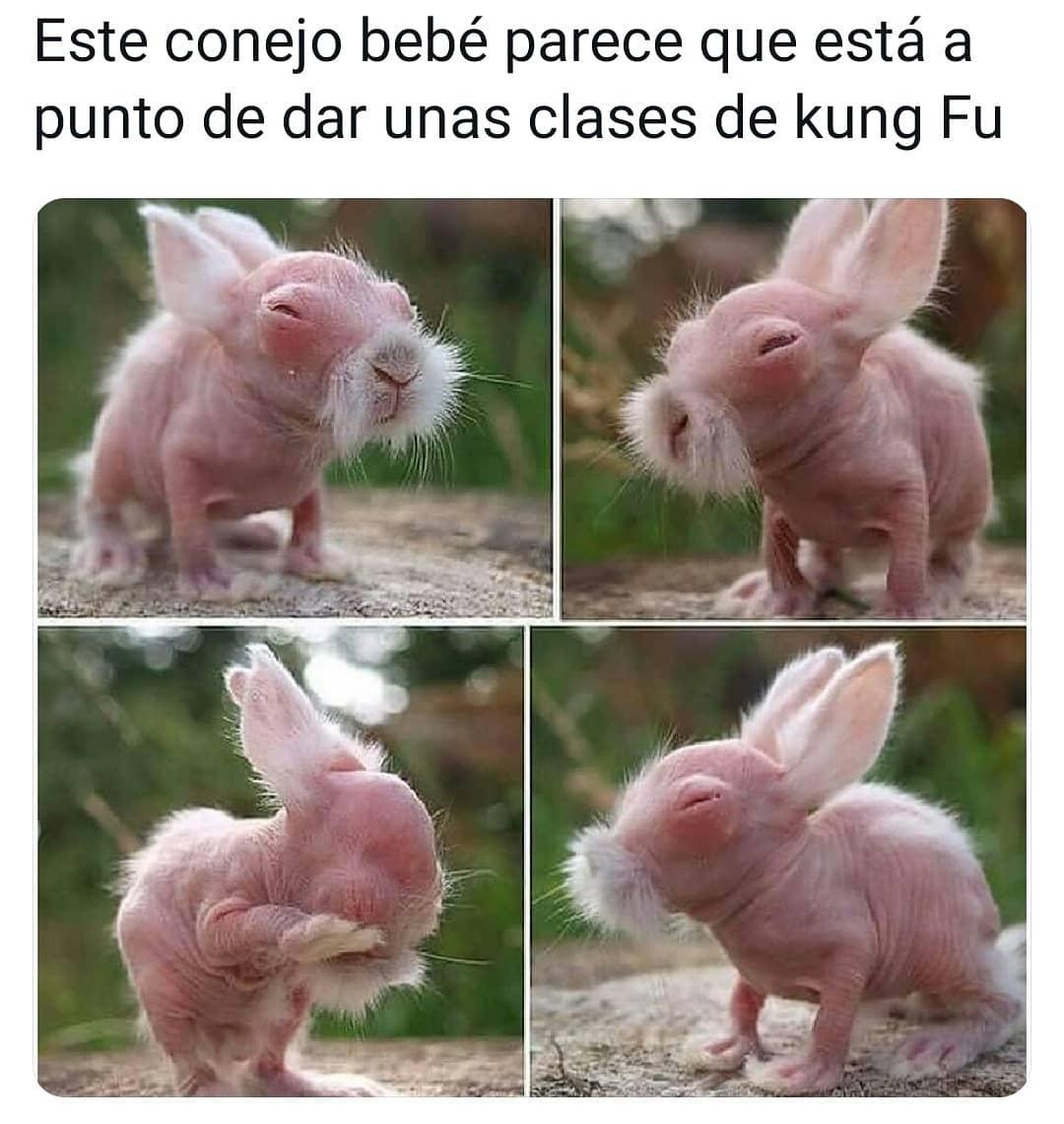 Este conejo bebé parece que está a punto de dar unas clases de kung Fu.