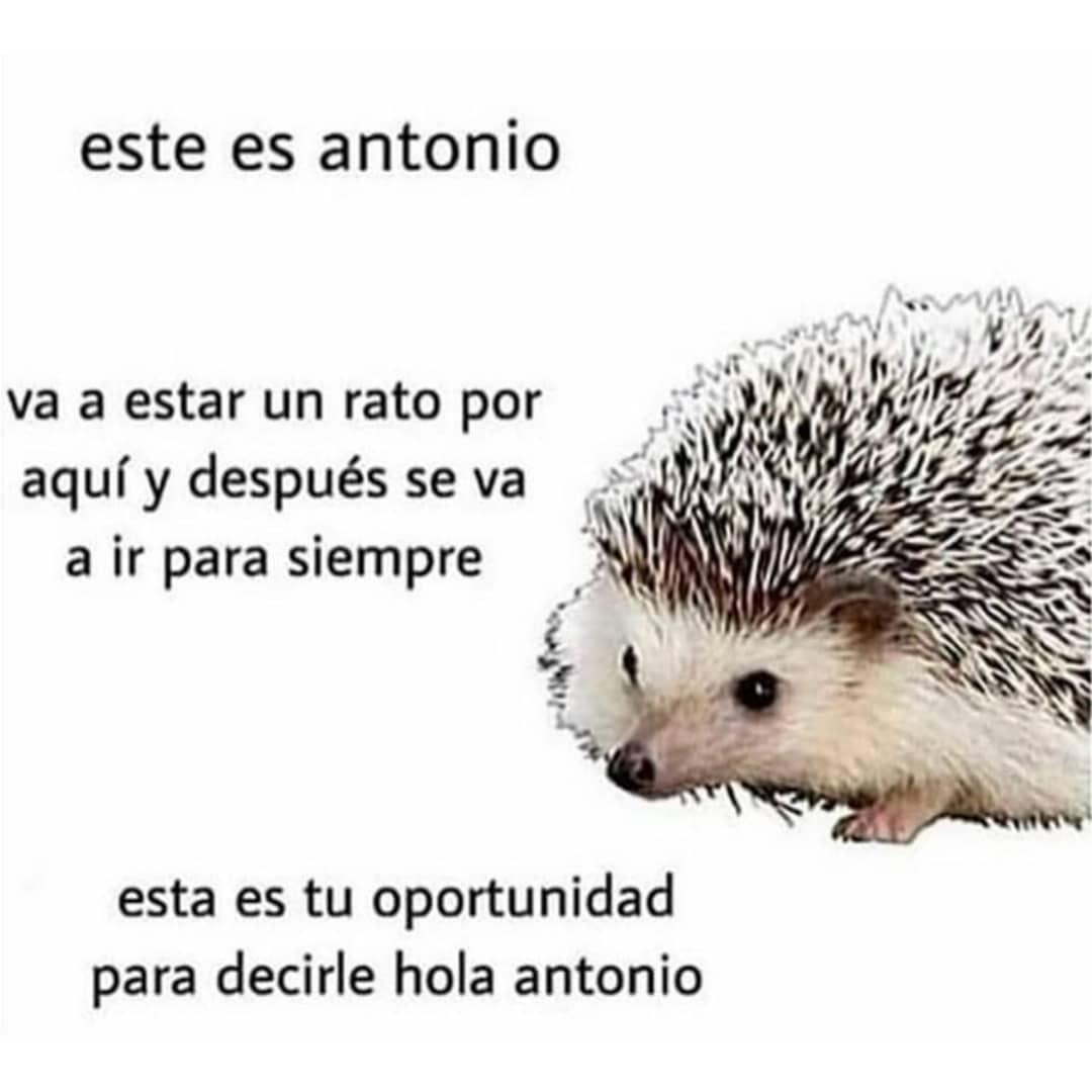 Este es Antonio. Va a estar un rato por aquí y después se va a ir para siempre. Esta es tu oportunidad para decirle hola Antonio.