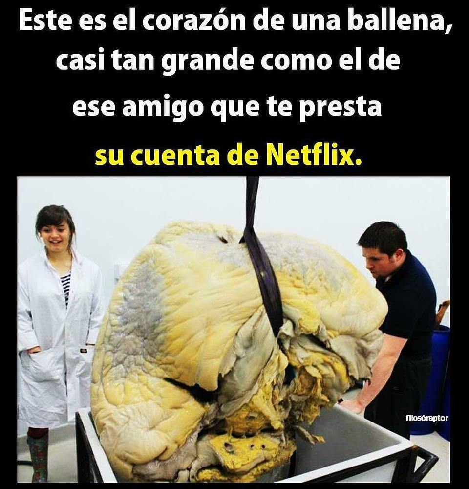 Este es el corazón de una ballena, casi tan grande como el de ese amigo que te presta su cuenta de Netflix.