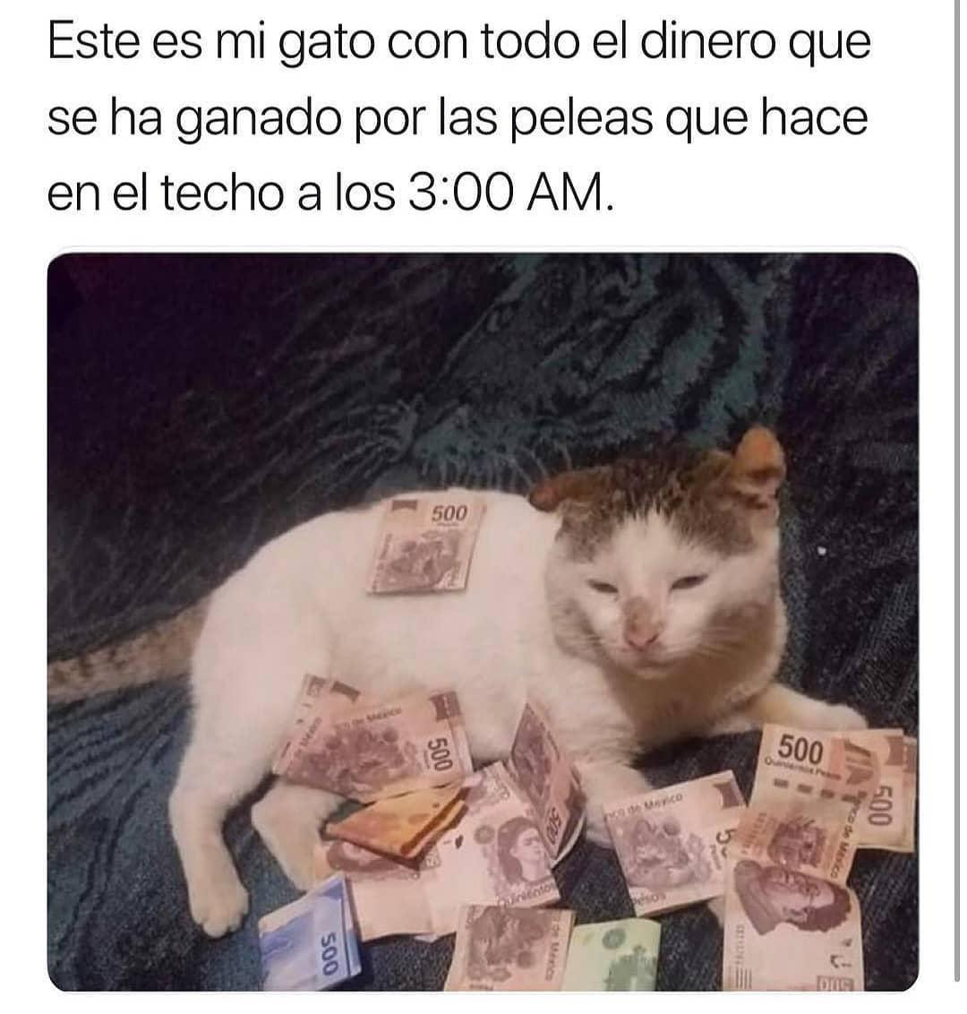 Este es mi gato con todo el dinero que se ha ganado por las peleas que hace en el techo a los 3:00 AM