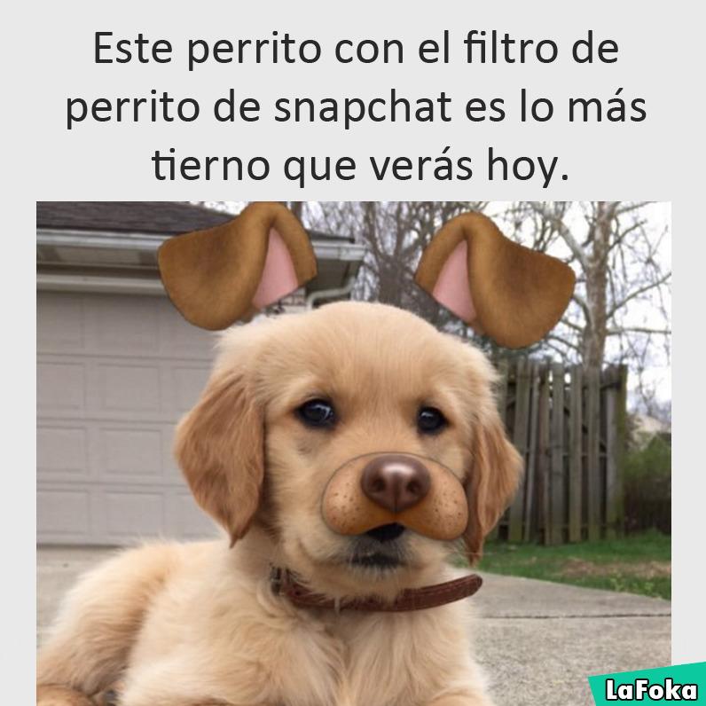 Este perrito con el filtro de perrito de snapchat es lo más tierno que verás hoy.