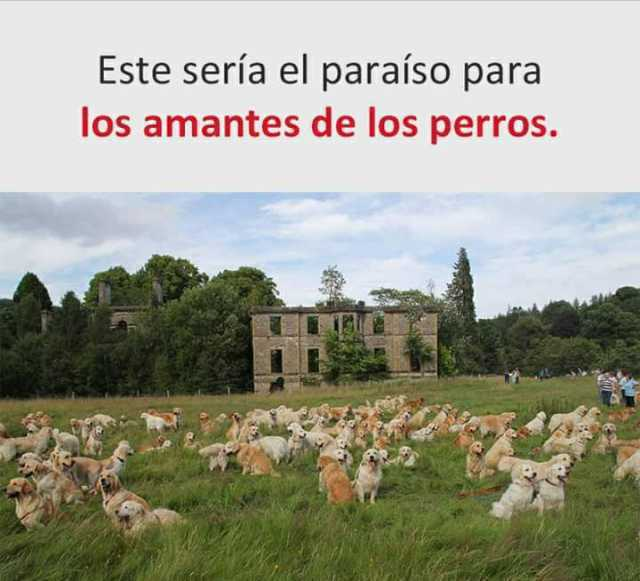 Este sería el paraíso para los amantes de los perros.