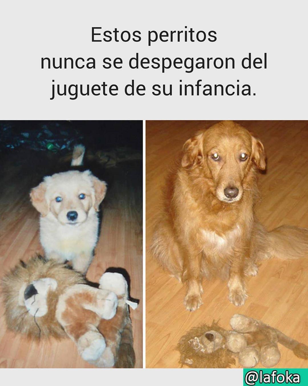 Estos perritos nunca se despegaron del juguete de su infancia.