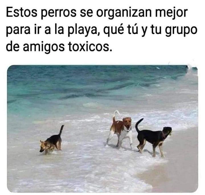 Estos perros se organizan mejor para ir a la playa, que tu y tu grupo de amigos tóxicos.