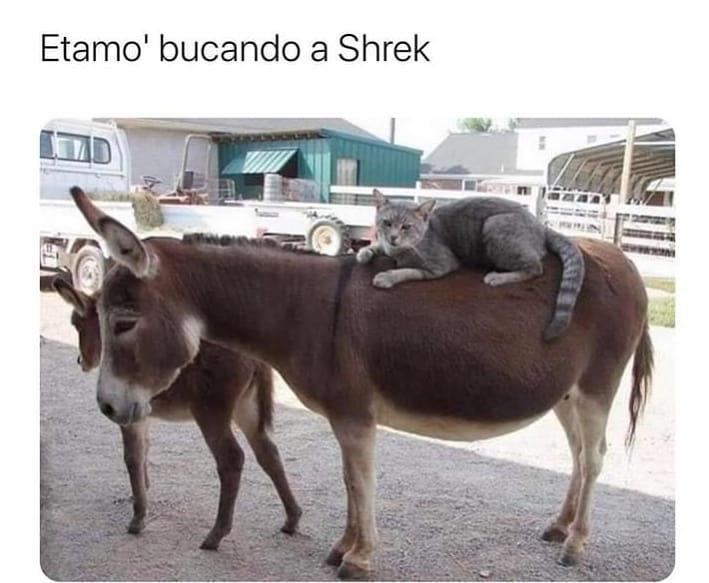 Etamo' bucando a Shrek.