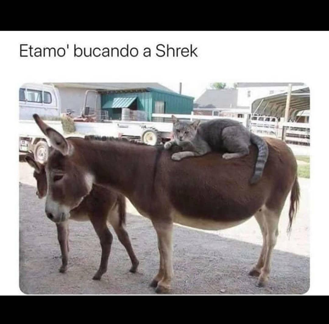 Etamo buscando a Shrek.