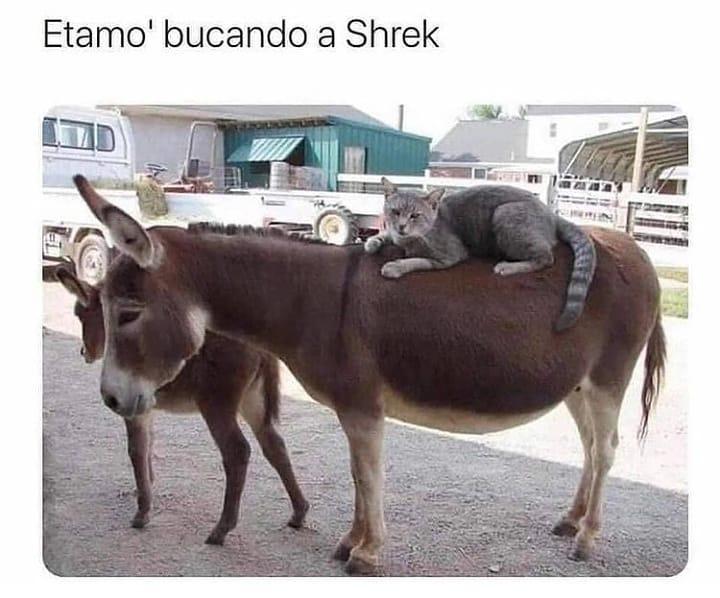 Etamol bucando a Shrek.