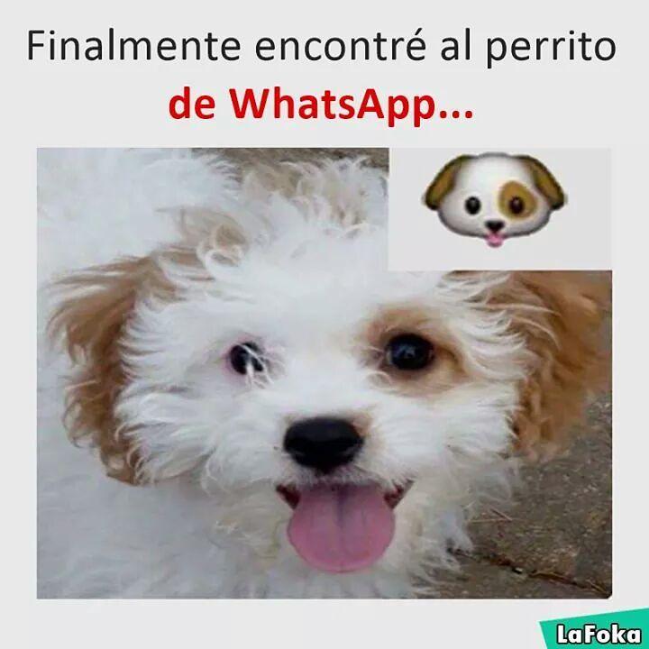 Finalmente encontré al perrito de Whatsapp.
