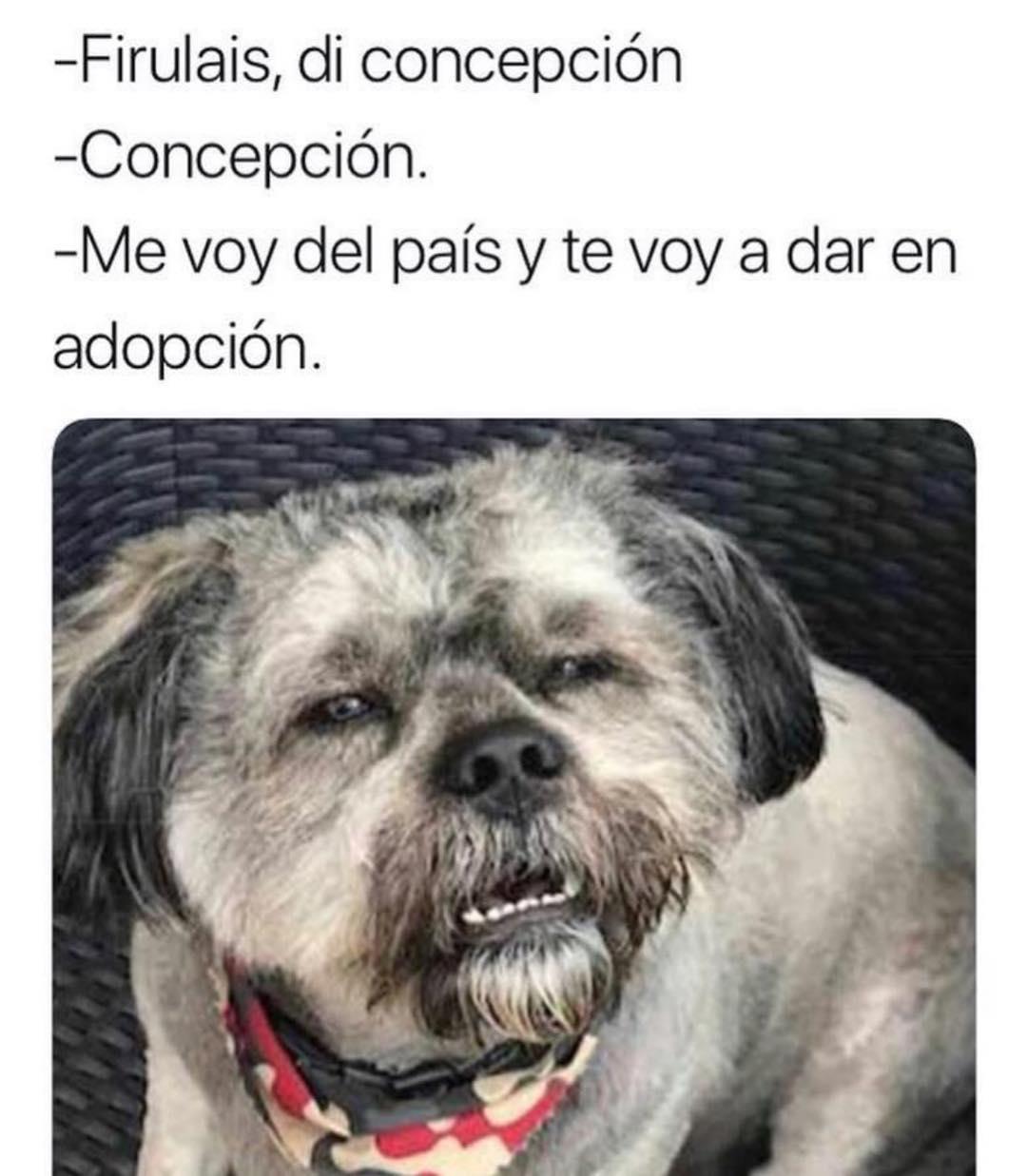 Firulais, di concepción.  Concepción.  Me voy del país y te voy a dar en adopción.