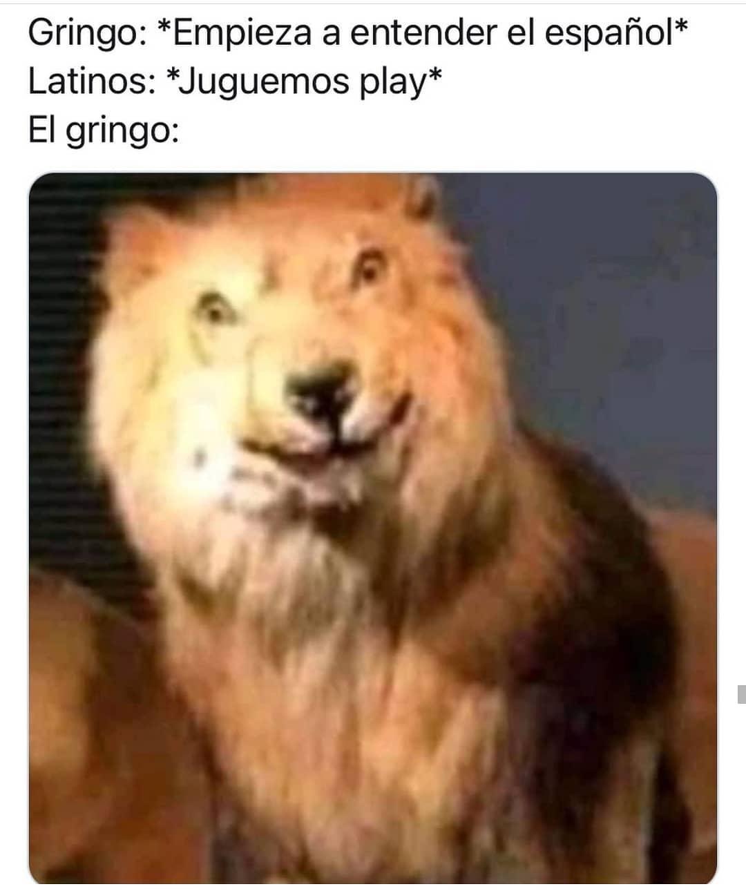 Gringo: *Empieza a entender el español*  Latinos: *Juguemos play*  El gringo: