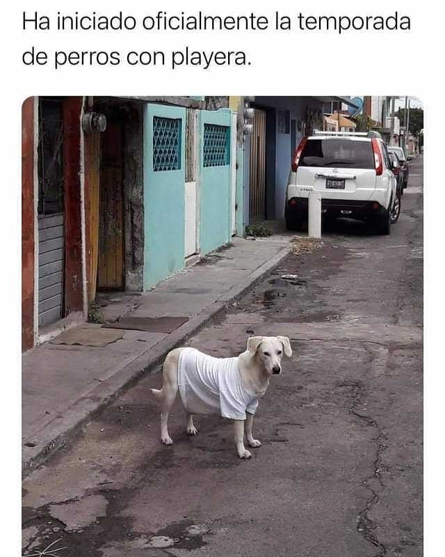 Ha iniciado oficialmente la temporada de perros con playera.