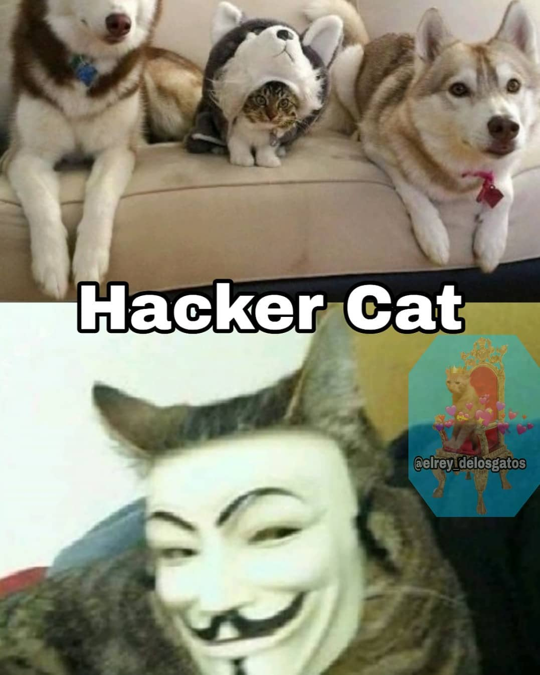 Hacker Cat.