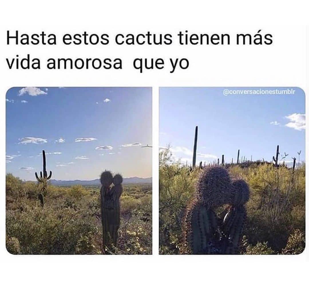 Hasta estos cactus tienen más vida amorosa que yo.