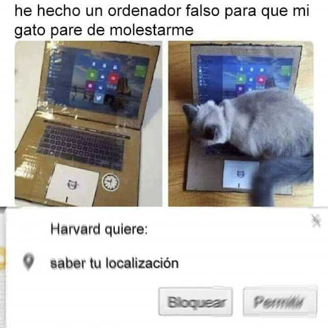 He hecho un ordenador falso para que mi gato pare de molestarme.  Harvard quiere: saber tu localización.
