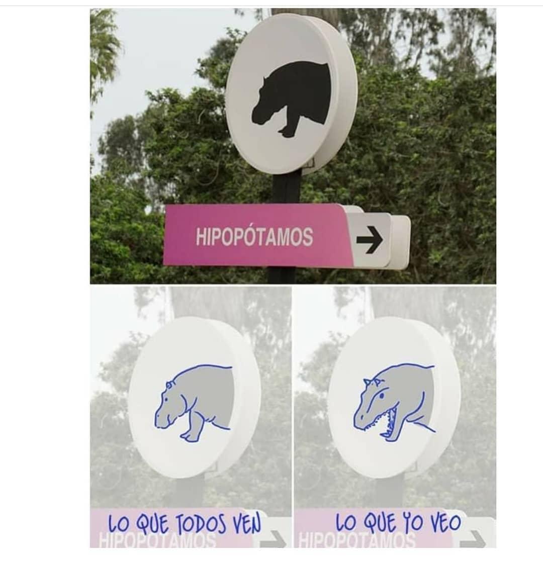 Hipopótamos. Lo que todos ven. Lo que yo veo.