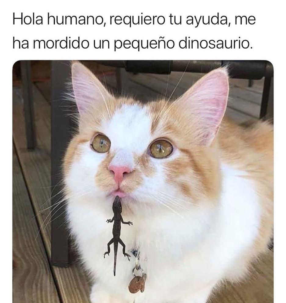 Hola humano, requiero tu ayuda, me ha mordido un pequeño dinosaurio.