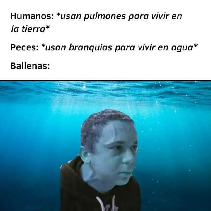 Humanos: Usan pulmones para vivir en la tierra.  Peces: Usan branquias para vivir en agua.  Ballenas: