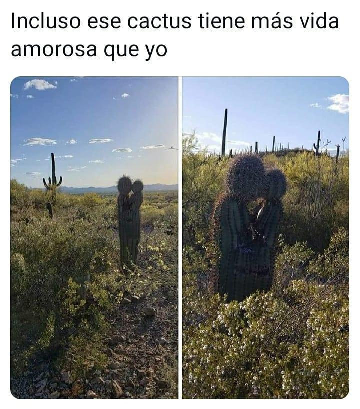 Incluso ese cactus tiene más vida amorosa que yo.
