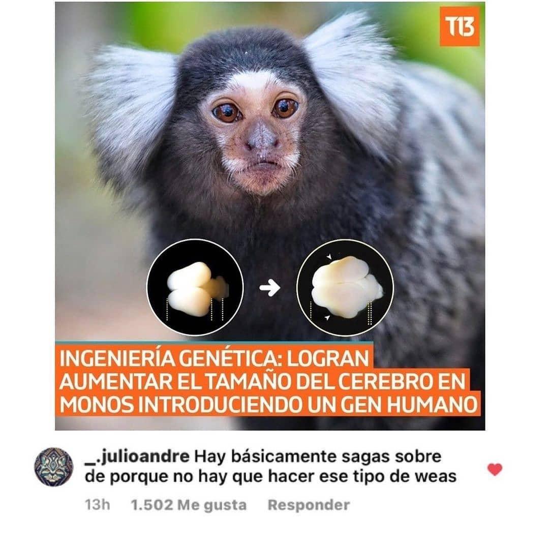 Ingeniería genética: Logran aumentar el tamaño del cerebro en monos introduciendo un gen humano.  Hay básicamente sagas sobre de porque no hay que hacer ese tipo de weas.